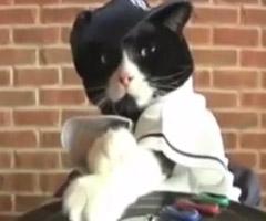 chat-dj-kitty