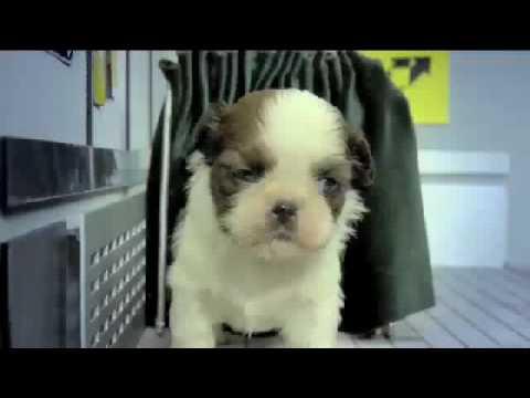 fuzzy fuzzy cute